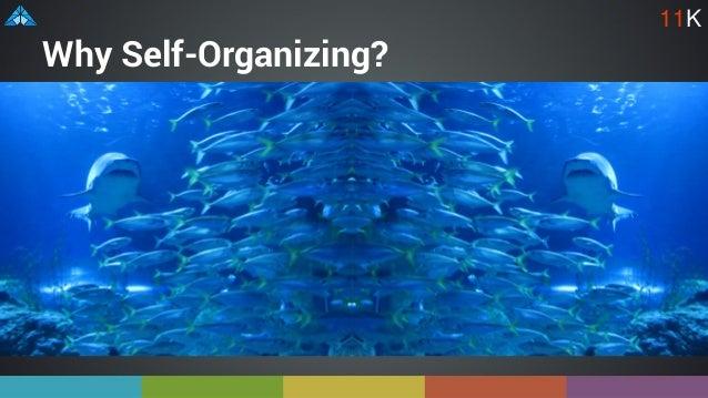 Why Self-Organizing? 11K