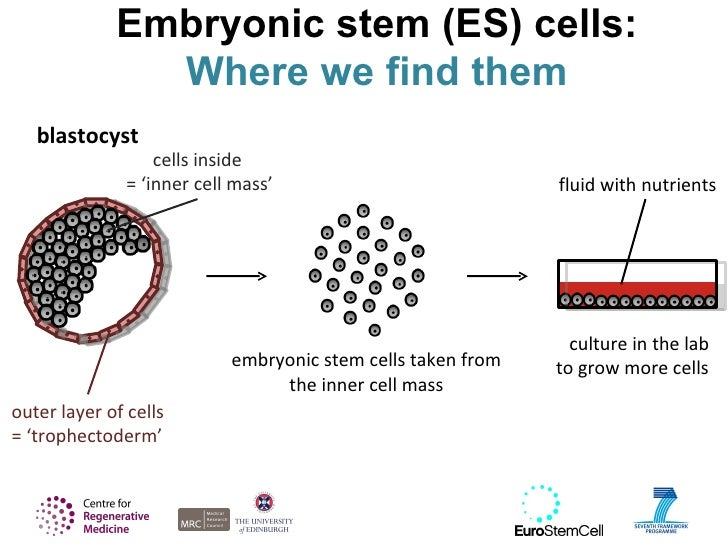 embryonic stem cell When most people think about about stem cells treating disease they think of a stem cell transplant in a stem cell transplant, embryonic stem cells are first specialized into the necessary adult cell type then, those mature cells replace tissue that is damaged by disease or injury.