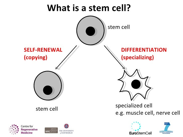 Introducing stem cells 5 what is a stem cell ccuart Choice Image