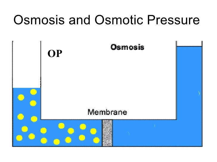 an introduction to the cell membrane The cell membrane (also known as the plasma membrane or cytoplasmic membrane, and historically referred to as the plasmalemma) is a biological membrane that separates .