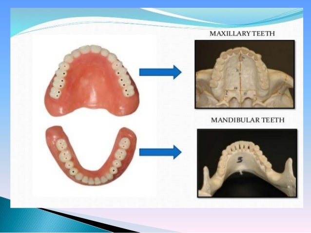 Introduction To Morphology - Definitions Slide 3