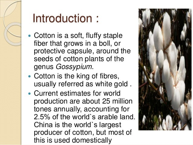 introduction to cotton Cotton ( gossypiumspp), a leading natural fiber, is a major cash crop in the world and is grown commercially in more than 50 countries china, india, usa, pakistan and uzbekistan are the.