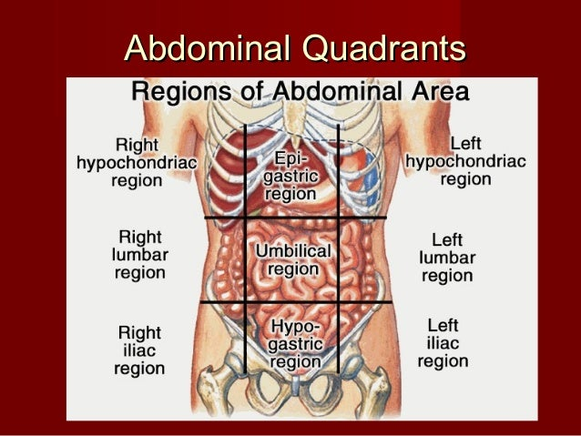 Introduction abdomen drgosai abdominal quadrantsabdominal quadrants ccuart