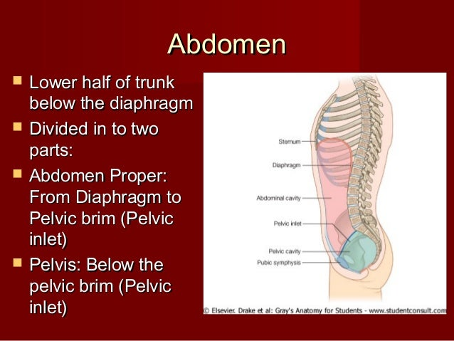 Introduction abdomen-dr.gosai Slide 3
