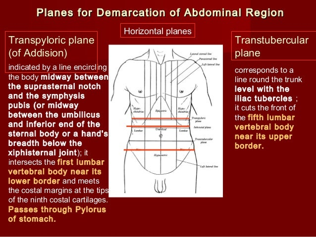 Introduction Abdomen Drgosai