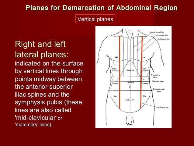 Anatomical Directional Terms and Body Planes  |Lateral Plane