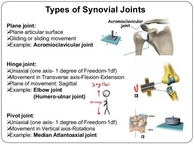 Synovial Joints 18