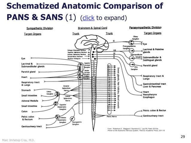 Autonomic Nervous System Physiology and Pharmacology