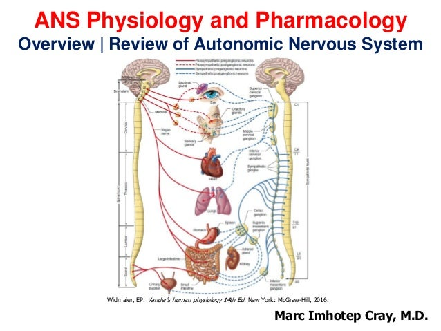 ANS Physiology and Pharmacology Introduction   Review of the Autonomic Nervous System Prepared and presented by: Marc Imho...