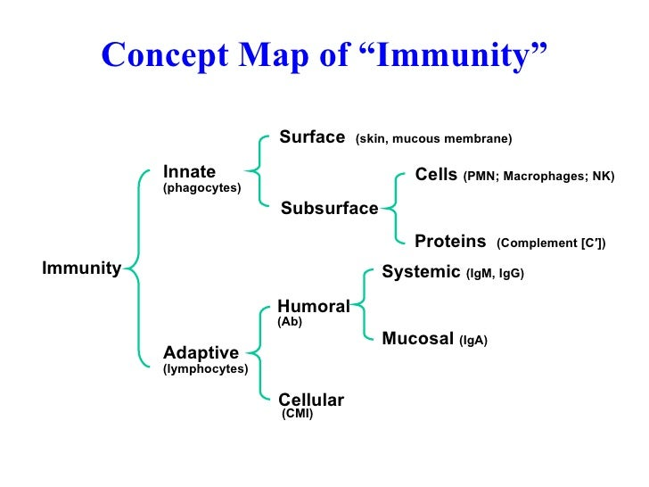Immunity Concept Map.Introduction To Immunity Antibody Function Diversity 2006 L1 2 Over