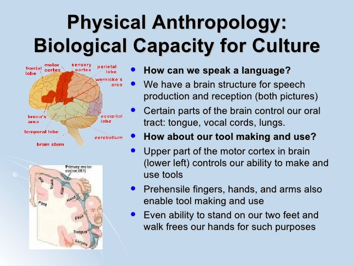 physical anthropology essay We have got a selection of good midterm paper subjects in physical anthropology choose a topic you like the most to start writing your project.