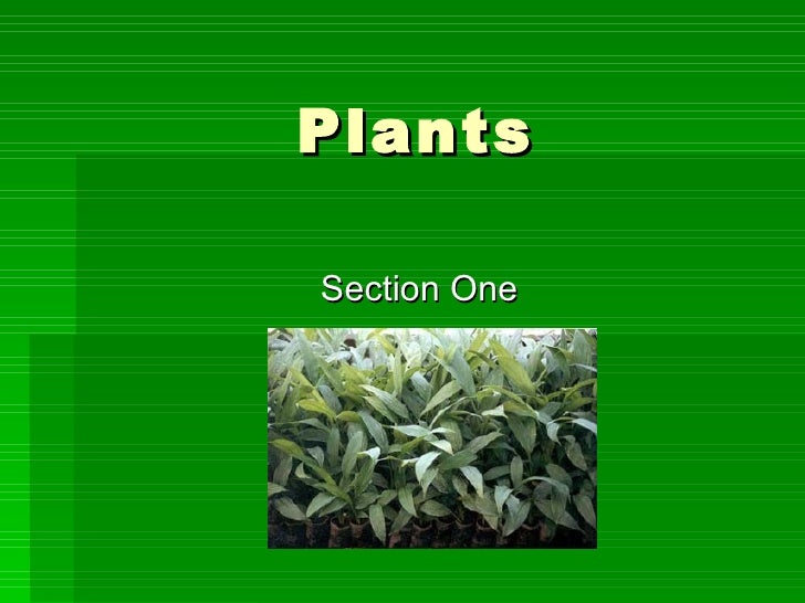 Plants Section One