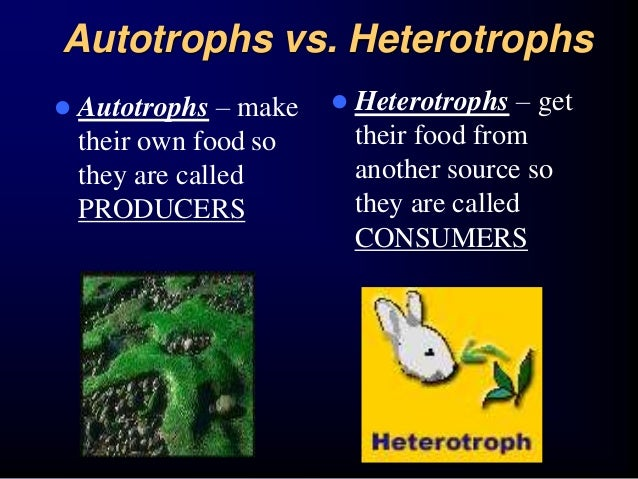 autotrophs chemosynthesis The word chemosynthesis was originally coined by wilhelm pfeffer in 1897 to describe energy production by oxidation of inorganic molecules by autotrophs (chemolithoautotrophy) under the modern definition, chemosynthesis also describes energy production via chemoorganoautotrophy.
