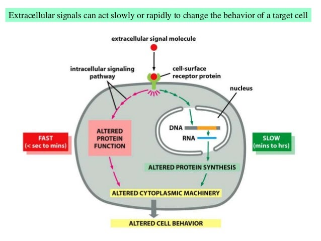 Research papers on cellular signal transduction in nerve cells