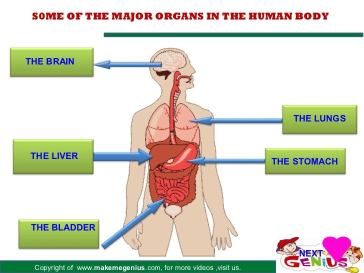 Introduction Of Human Body Kids