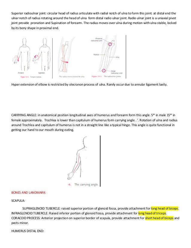 Introduction Of Kinesiology And Upper Limb Anatomy