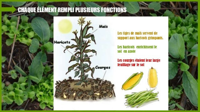 Introduction a la permaculture for Rendement permaculture