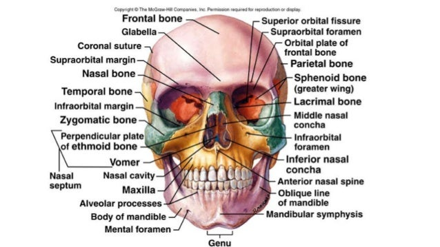 introduction to bones in the body Introduction to the skeletal system  • support the mass of the body and all of the muscles and organs that are part of the body  • bones that bear more.
