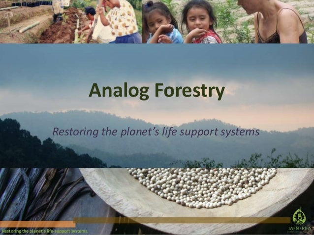 Analog Forestry Restoring the planet's life support systems  Restoring the planet's life-support systems.
