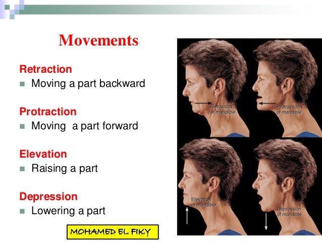 Introduction To Anatomy Bmc