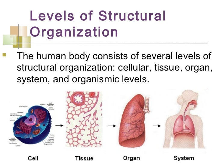 Introduction To Anatomy Physiology2