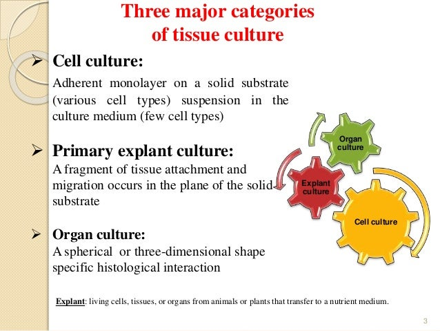 application of animal cell culture slideshare
