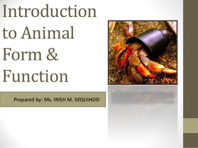 Introduction to Animal Form & Function Prepared by: Ms. IRISH M. SEQUIHOD
