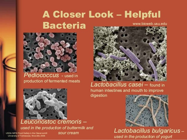 an introduction to bacteria Introduction & hypothesis bacteria are a specific kind of prokaryotic organisms that are very versatile and can survive in a wide range of environments.