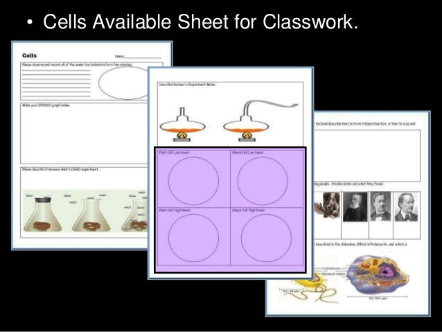 Introduction To Cells Cheek Cell And Onion Cell Lab Lesson Powerpoi