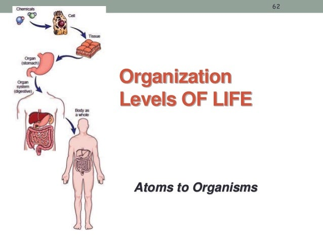an introduction to the nucleus cell wall and the organs in the cell Unlike most editing & proofreading services, we edit for everything: grammar, spelling, punctuation, idea flow, sentence structure, & more get started now.
