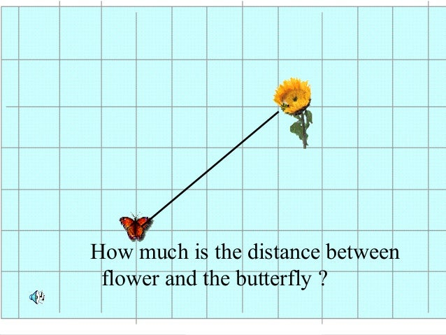 How much is the distance between flower and the butterfly ?