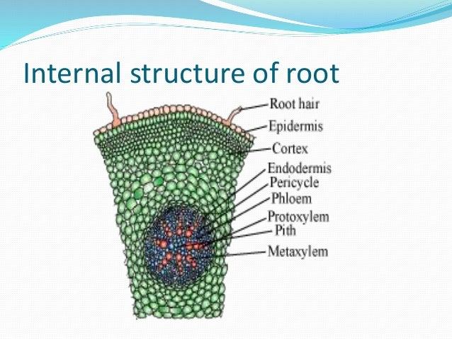 Crop physiology