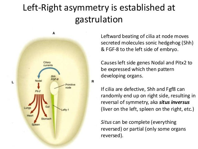 Introduction to the Reproductive System