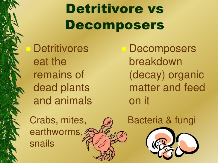 Image result for decomposer and scavenger