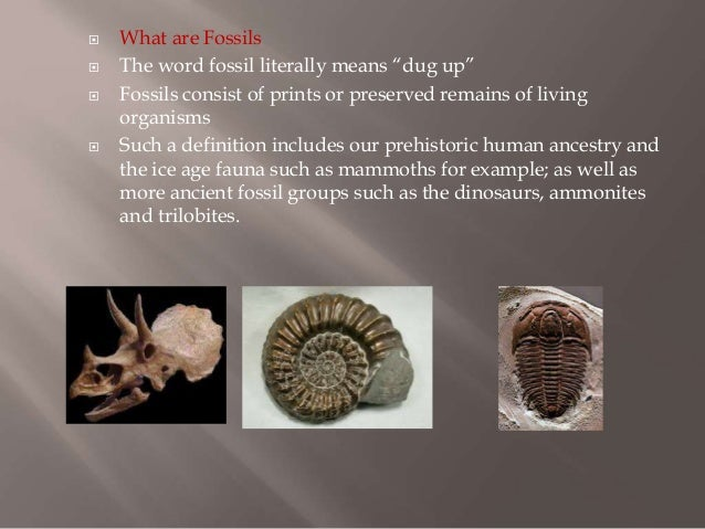 what is a fossil definition