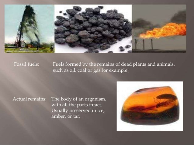 an introduction to fossil fuels consumption Energy and agriculture as a result of the industrialization and consolidation of agriculture, food production has become increasingly dependent on energy derived from fossil fuels.