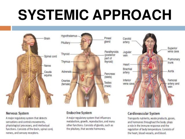 Introduction To General Anatomy I