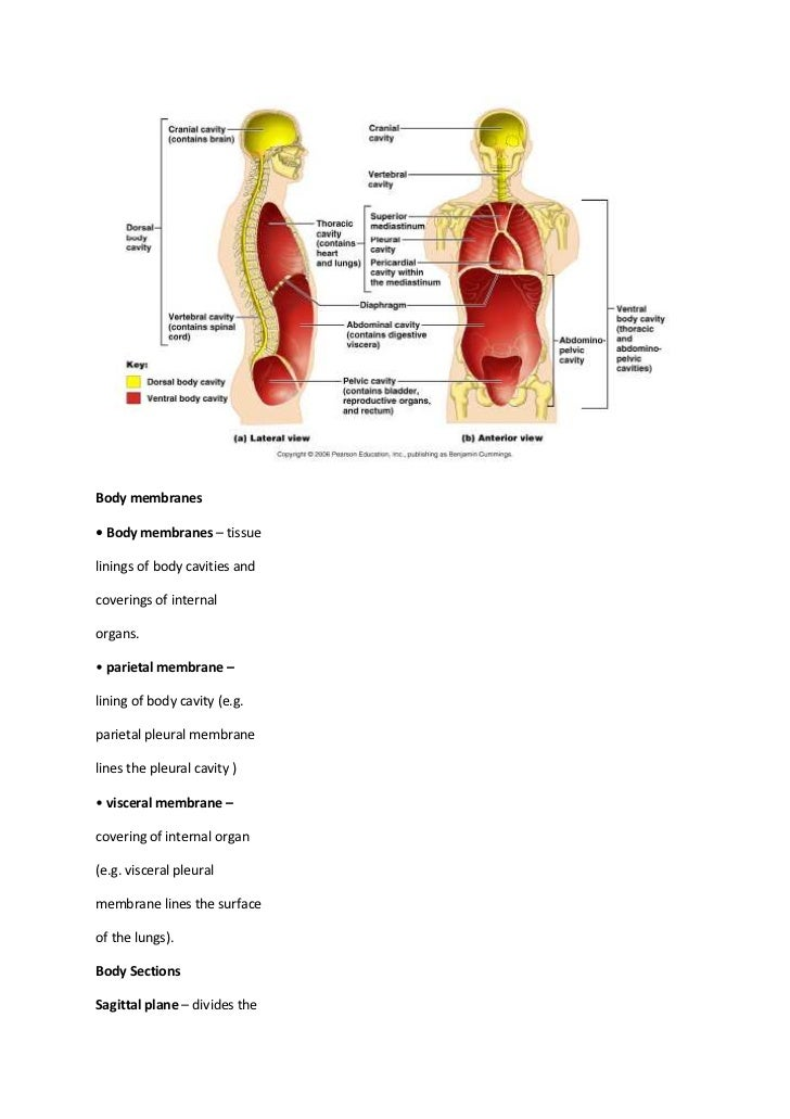 Basic Human Anatomy Terminology