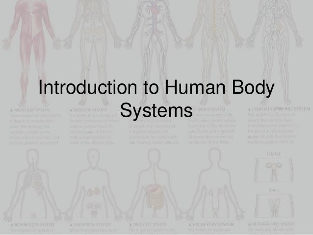 introduction to systems in the body Describe the composition of urine label structures of the urinary system  aware  of: cleansing the blood and ridding the body of wastes probably come to mind.