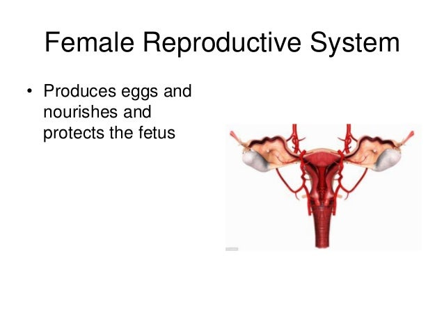 an introduction to the complexity of the human reproductive system Reproductive hormones overview - anatomy & physiology  introduction reproductive hormones often have  please note that due to the complexity of the .