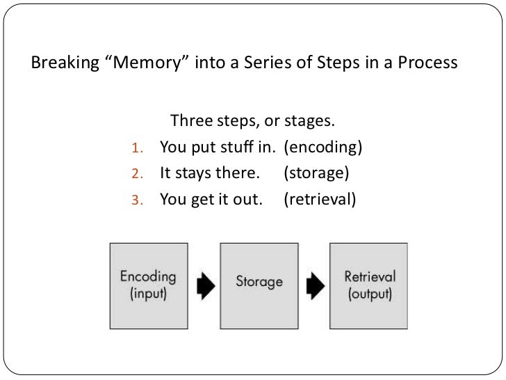 Introduction to human memory