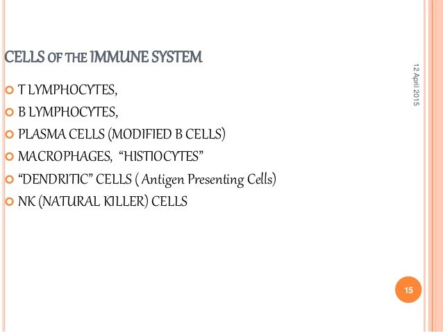 an introduction to the b cells produced in the bone marrow that are distributed through the body in
