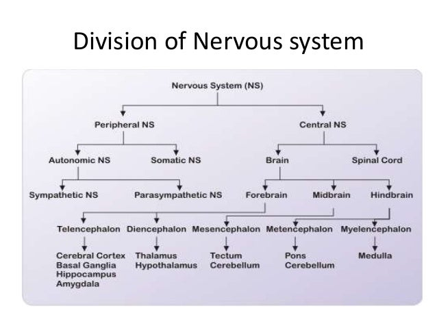 introduction to nervous system pdf