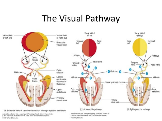Introduction to ocular anatomy and physiology -a presentation at www.…