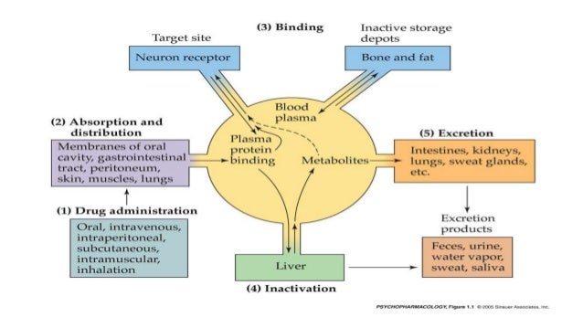 an overview of the process of drug metabolism and excretion This section takes a look at drug metabolism - specifically, it provides a short  overview of the various common  metabolism is what happens to a drug when it  undergoes biotransformation through enzymatic processes in the body  place  in the liver with the primary purpose to deactivate a drug and prepare it for  excretion.