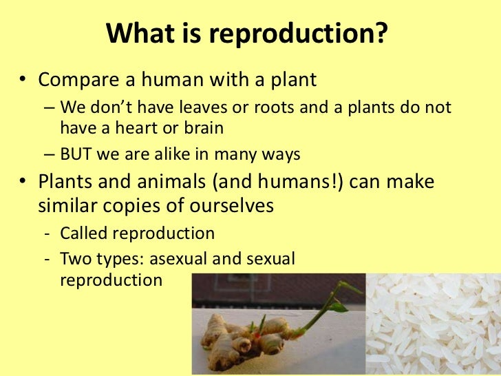 Asexual reproduction introduction