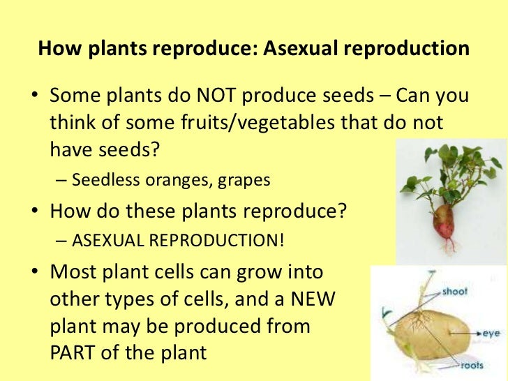 Three ways plants reproduce asexually
