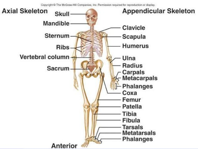 an introduction to the analysis of bones The introduction of this quantitative approach to the study of  lemoine g (ed)  1997 use wear analysis on bone and antler tools of the.