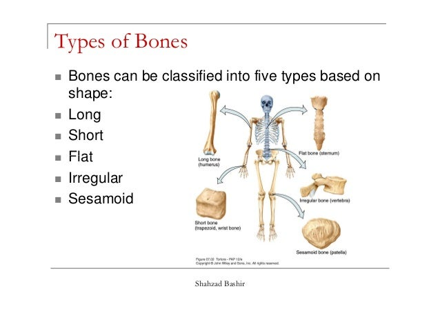 introduction to the skeleton Skeletal system  upper limb bones  radius and ulna bones anatomy – introduction last update: dec 7th, 2017 radius and ulna bones anatomy – introduction introduction to the radius and ulna bones anatomy the radius and ulna are the bones of the forearm the forearm is the region of the upper limb that extends from the elbow to the wrist.