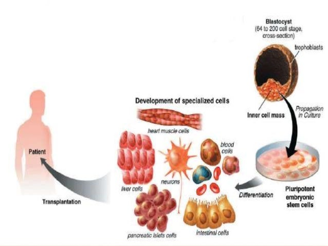 an introduction to the analysis of stem cell research Introduction according to the national institute of health, stem cells are cells that have the remarkable potential to develop into many different cell types in the body.